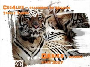 Tiger Temple_Cee4life
