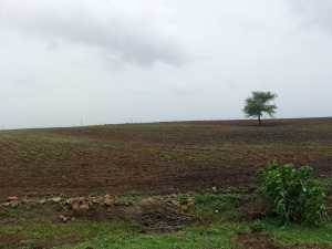 new land under agriculture