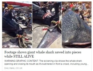 Giant Shark sawed into pieces (Courtesy: facebook)