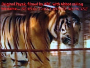 Tiger-dead for fake Chinese medicine