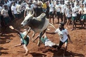 bull sport