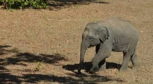 Baby elephant in Satpura Tiger Reserve, India