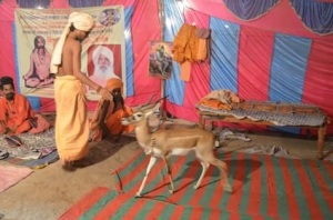 Black Buck and Ujjain Simhastha 2016