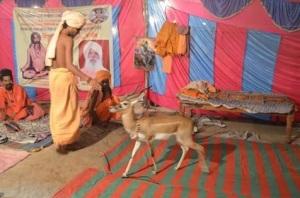 Black Buck and Ujjain Simhastha 2016