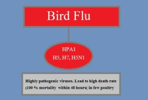 h5-avian-influenza-virus