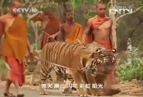 Appeal: Ban this Tiger Temple video